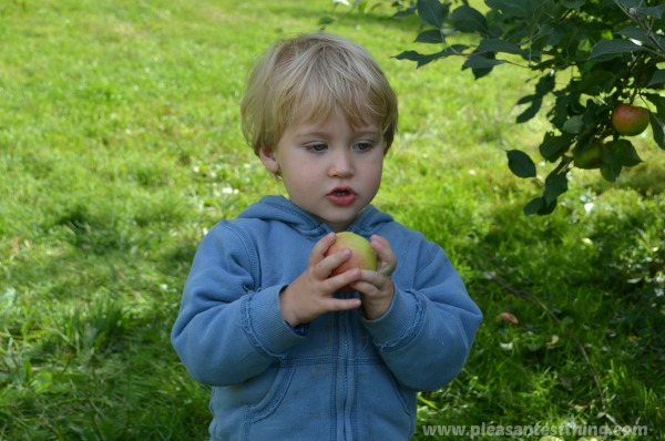 Picking Apples with Toddlers and Preschoolers - without a meltdown!