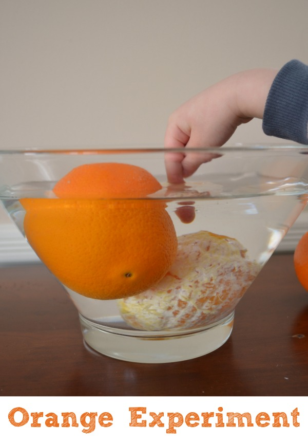 Orange science experiment for kids!