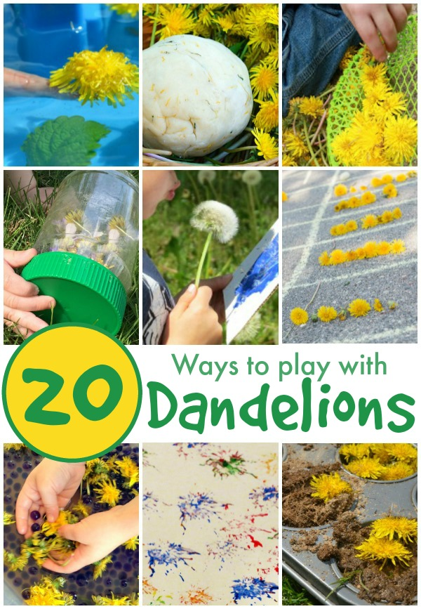 20 FUN-filled ways to play with dandelions!